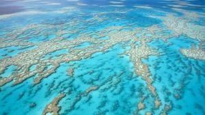 واحات الشعاب المرجانية المميتة صورة
