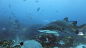 Giant Sharks photo
