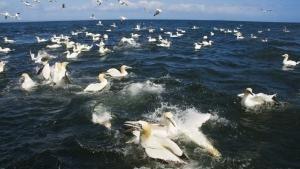عالم المحيطات صورة