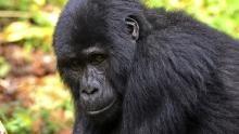 Uganda's Wildlife show