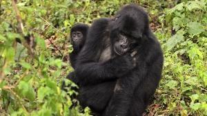 Uganda's Wildlife photo
