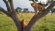 Amazing Lions show
