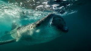 Underwater Giant photo