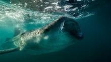 Underwater Giant show