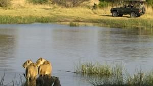 Surviving Lions photo