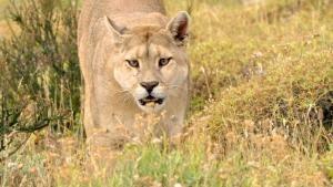 Patagonia Wildlife photo