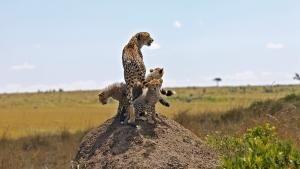 Feline Motherhood photo