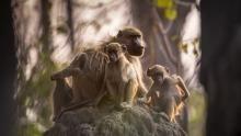 Okavango Delta show