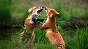 شب نبرد حیوانات عکس