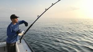 ماهی یا قحطی عکس