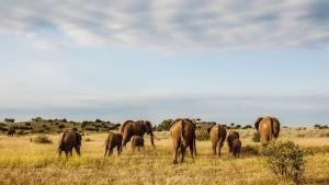 African Wildlife photo