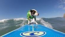 Pups Photoshoot show