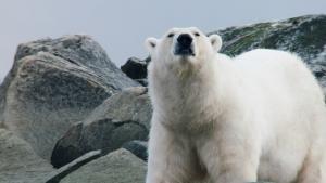 براري القطب الشمالي صورة