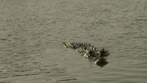 Monster Croc Wrangler photo