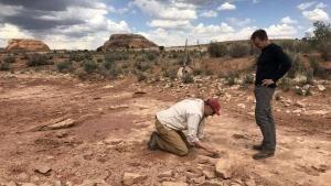 به دنبال کشف بقایای دایناسورها عکس