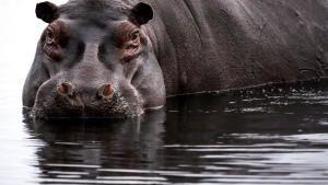Africa's Wild Side photo