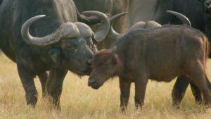 براري إفريقيا صورة