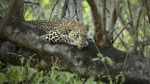 Wildlife Fierceness photo