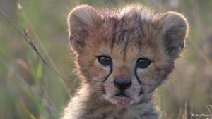 Born in Africa photo