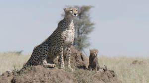 مولود في أفريقيا صورة
