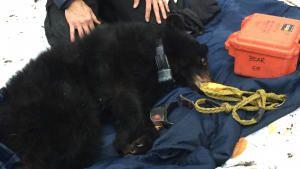 Inside the Bear's Den photo