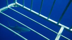 Swimming with Sharks photo