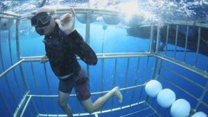 السباحة مع سمكة القرش صورة