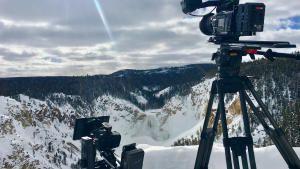 Yellowstone Wolves photo