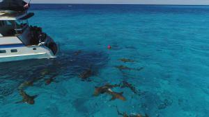 Sharks Underwater photo