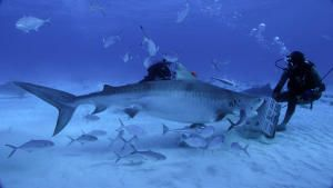 Sharks Underwater photo