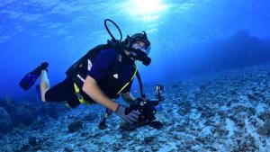 Diving with Sharks photo