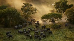 The Last Animals photo