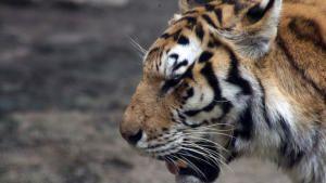 Amazing Wildlife photo