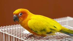 Exotic Animal Care photo