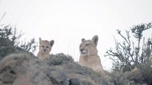 Man vs. Puma photo