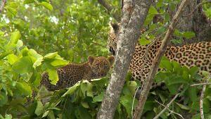 Leopard Kingdom photo