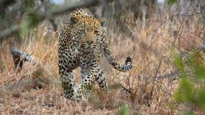 Leopard Kingdom photo