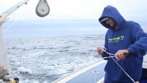 الصيد السريع صورة