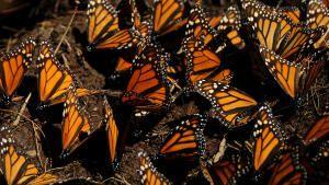Wildlife Migrations 照片
