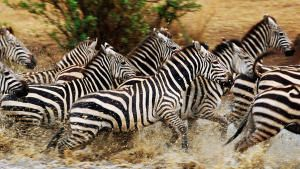 Wildlife Migrations photo