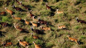 Wildlife Migrations photo