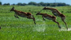 Okavango: River of Dreams photo