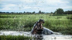 أوكافانغو نهر الأحلام صورة