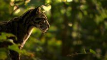 Wildcats Pics 節目