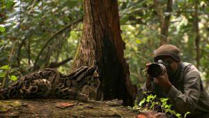 Wildcats Pics photo