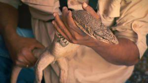 Wildlife Rescue photo