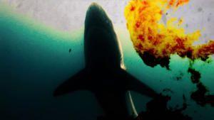 شاطىء عضة القرش صورة