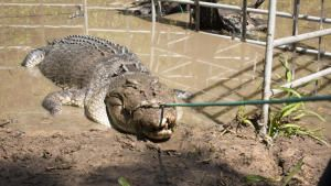 Croc In The Hole photo