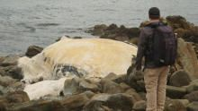 شاطئ أستراليا المميت برنامج