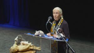 Jane Goodall: The Hope photo
